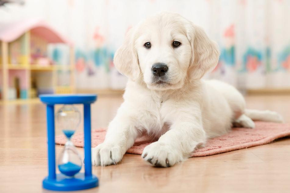 Düfte und Geräusche vermitteln Hunden ein Gefühl von Zeit.