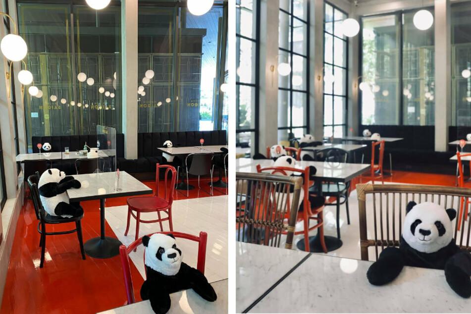 Grandiose Idee: Pandabären helfen Restaurant, die Plätze freizuhalten