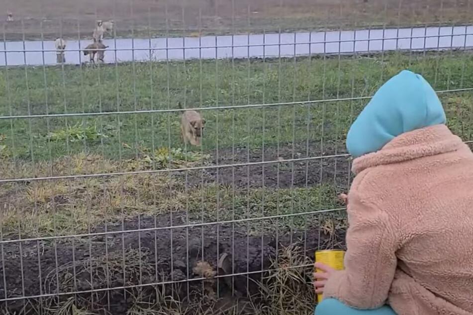 Olena lockte die Hunde mit Futter.