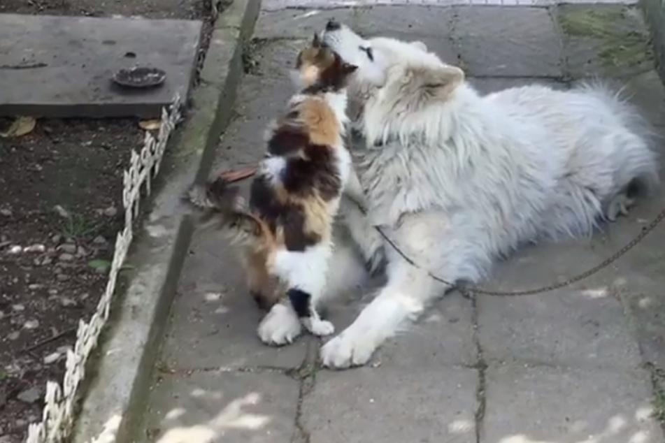Süßer Clip beweist: Freundschaft zwischen Katze und Hund ist doch möglich