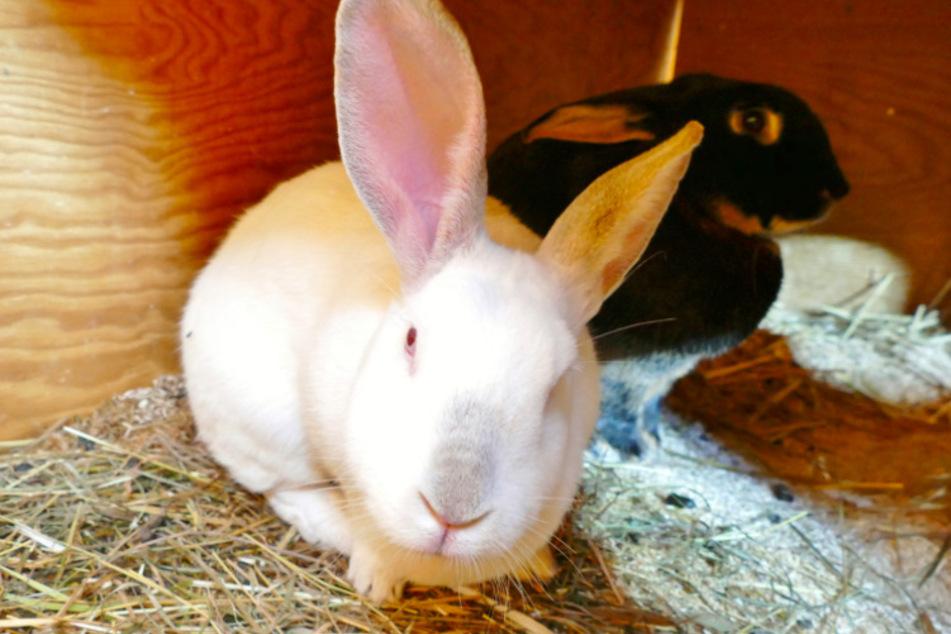 Kaninchen Thunder und Bud Spencer.