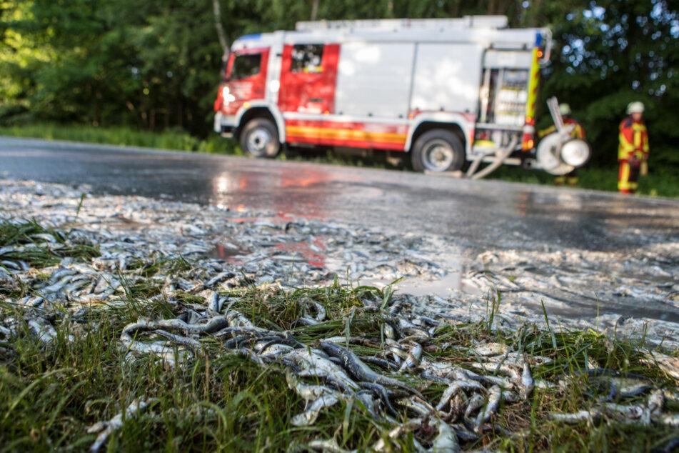 Schleim-Alarm auf Bundesstraße: Laster verliert Fischladung