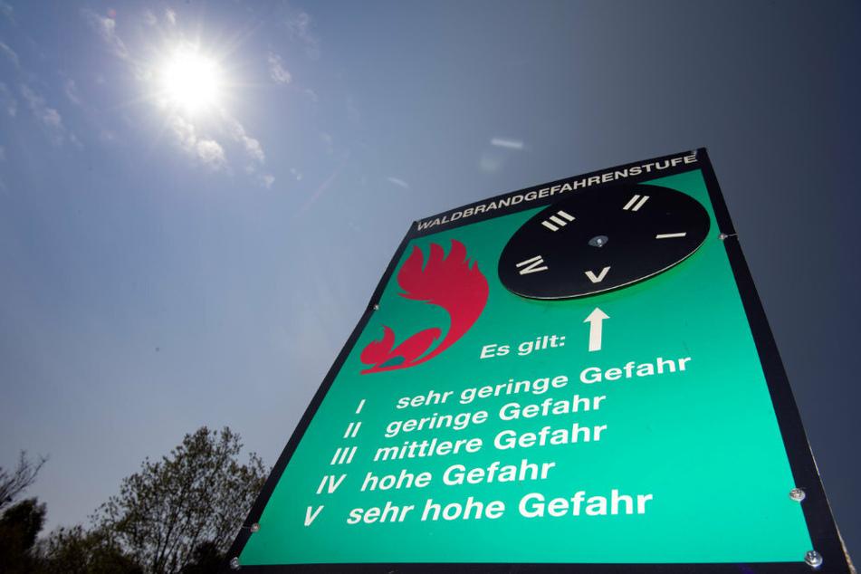 Berlin: Waldbrandgefahr in Brandenburg dank Regen gesunken: Entwarnung steht aus