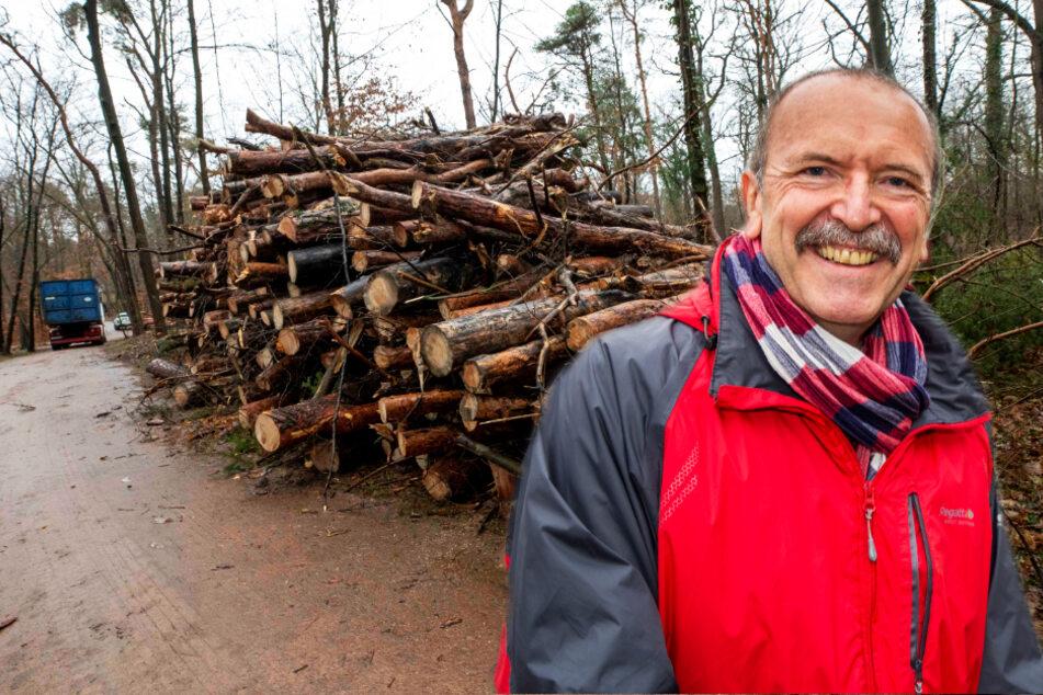 Dresden: Dresdens Bäume sterben ab! Stadt kommt mit Neupflanzungen nicht hinterher