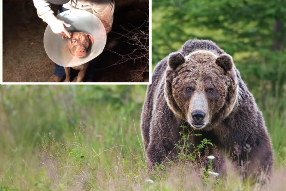 Heroic dog owner punches bear to save his beloved pet