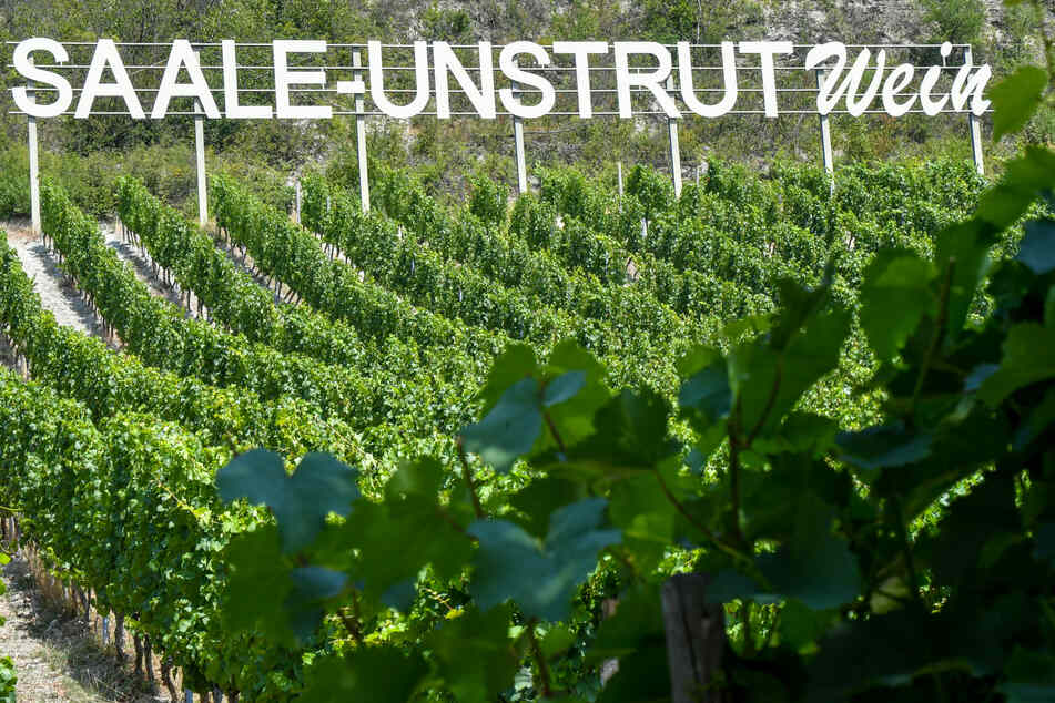 Über Pfingsten findet jährlich die Weinmeile im Saale-Unstrut-Gebiet statt - in diesem Jahr eben online.