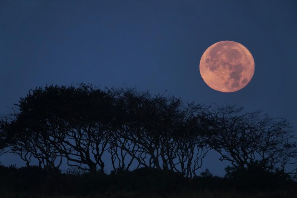 Während einer Mondfinsternis erstrahlt der Erdtrabant schon mal in roter Farbe. Aber geht das auch in blau?
