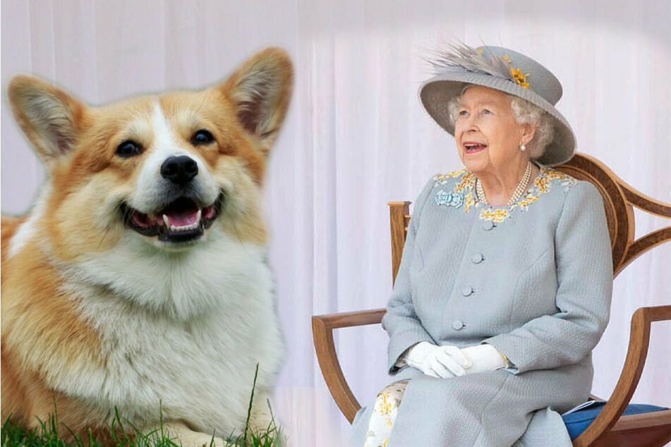Queen Elizabeth II (95) has a new four-legged friend!
