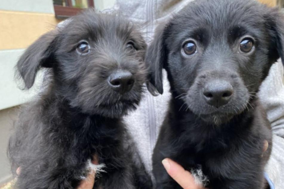 """Tierheim bittet: """"Unterstützt den illegalen Handel mit Tieren nicht!"""""""