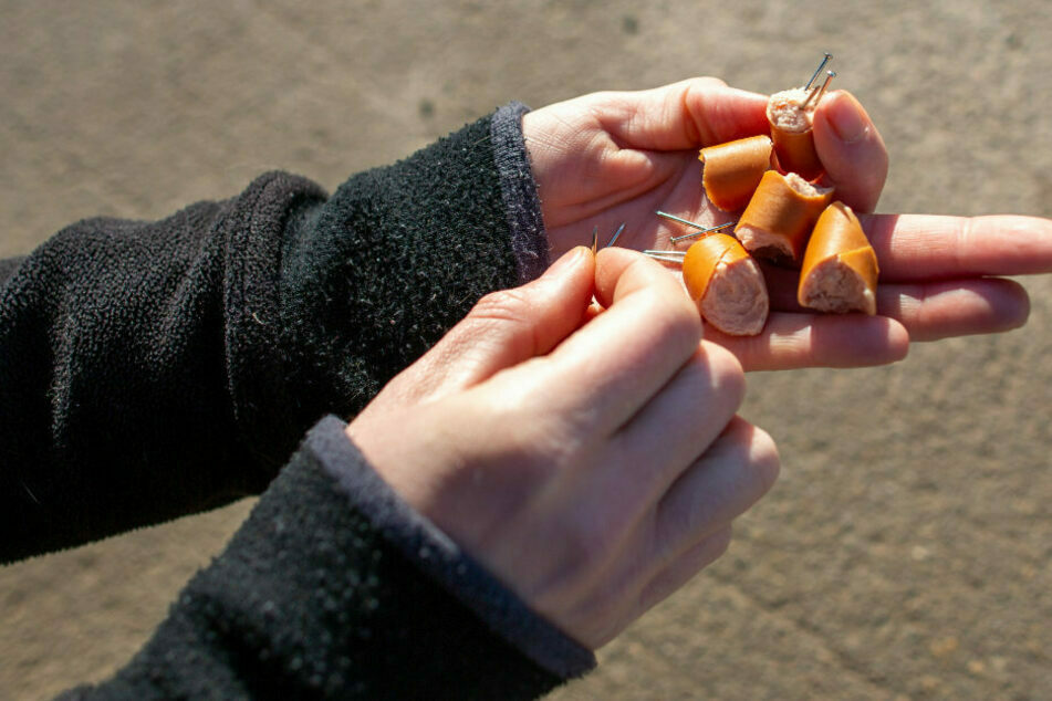 Hundehasser im Erzgebirge: Wieder Wurst mit Nägeln ausgelegt