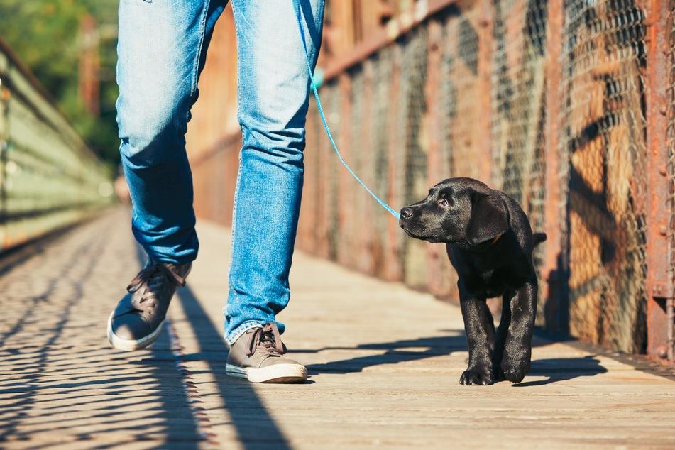 Hundeschule trotz Lockdown? So ist das Training mit dem Hund in NRW weiter möglich