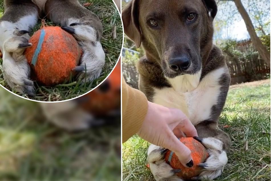 Wie er ihn hält! Hund Fritz hat den Ball fest umklammert.