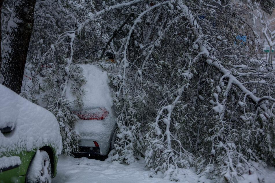 """Ein Ast, der durch die Schneemassen abgebrochen ist, liegt auf einem schneebedeckten Auto. Das Sturmtief """"Filomena"""" sorgt in Spanien landesweit für Rekordkälte und viel Schnee."""