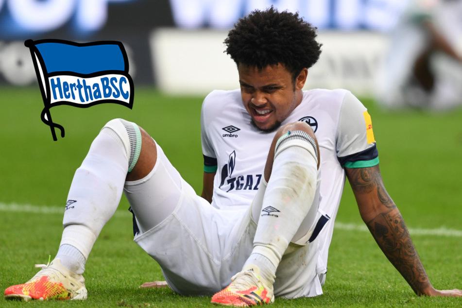 Hertha BSC: McKennie-Wechsel geplatzt!