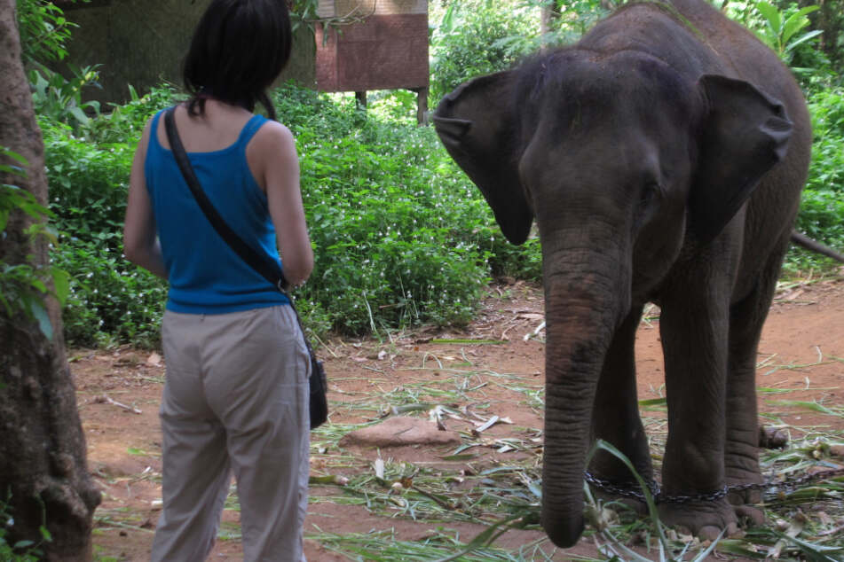 Corona bremst Tourismus: Hunderte Elefanten drohen nun zu verhungern!