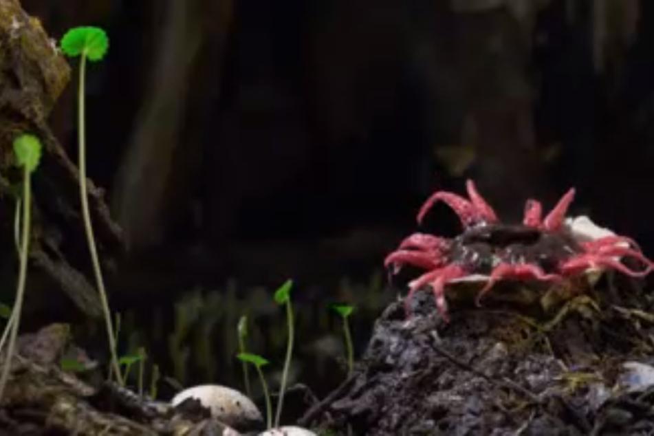Weder Pflanze noch Tier: Neue mysteriöse Krankheiten durch Sporen