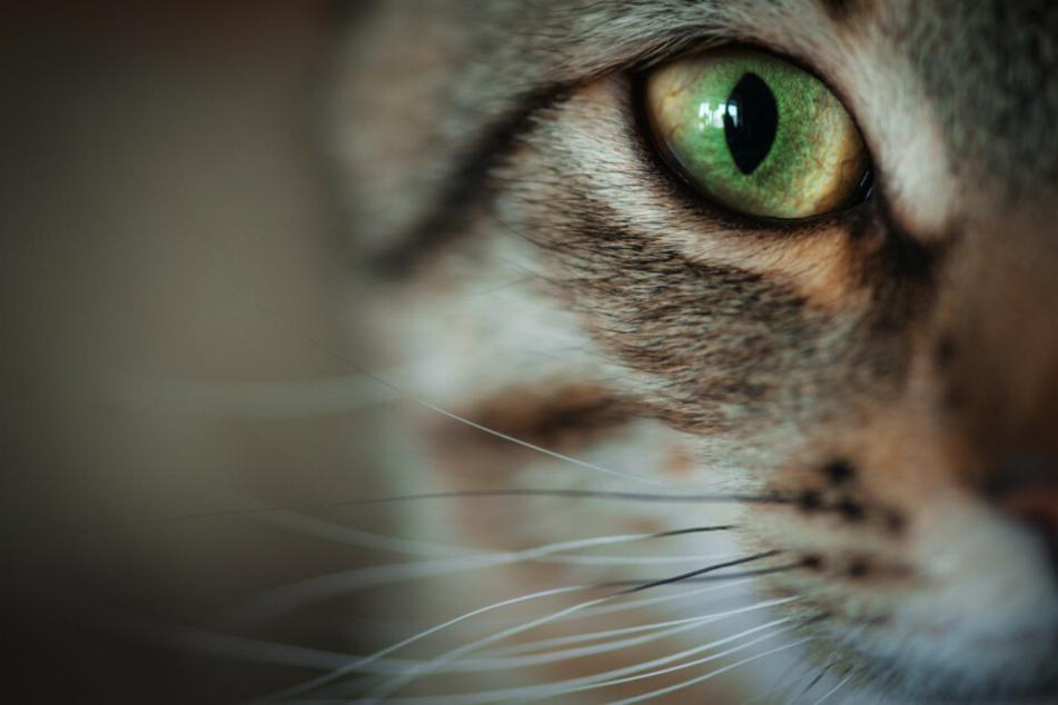 """Das krankhafte horten von Tieren, das sogenannte """"Animal Hoarding"""", führt oftmals zu einer Verwahrlosung. In einer Wohnung in Tempelhof-Schöneberg wurden 57 Katzen entdeckt. (Symbolfoto)"""