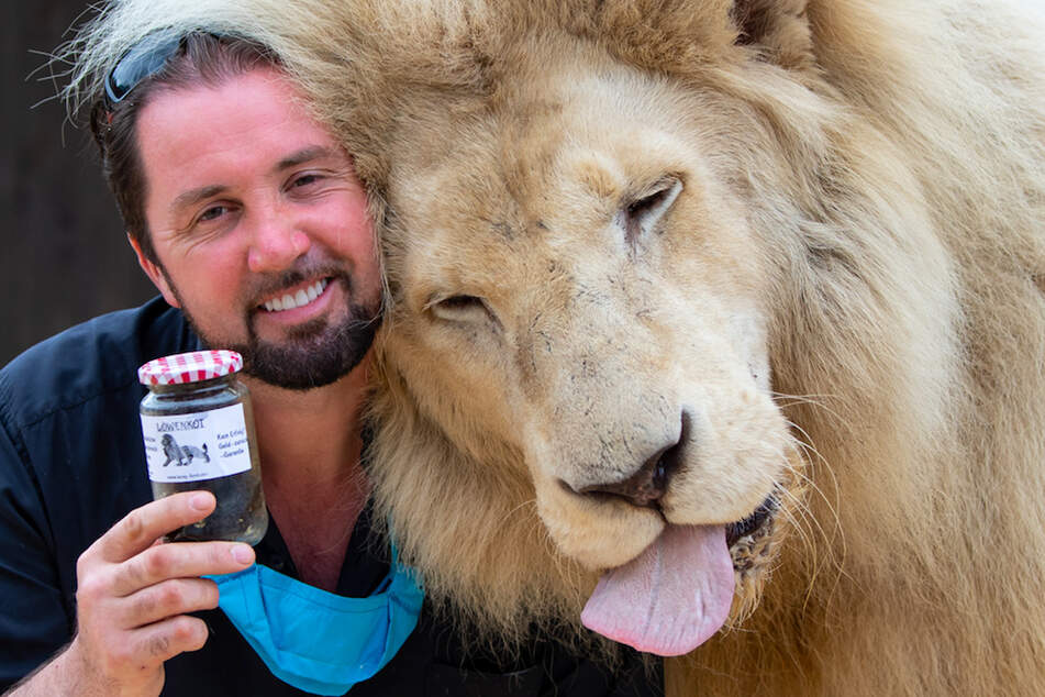 Martin Lacey, Löwen- und Tigerdompteur im Circus Krone, steht neben seinem Löwen King Tonga und hält dabei ein Glas mit Löwenkot in den Händen, das der Circus Krone verkauft.