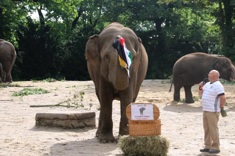 Reviertierpfleger Michael Schmidt schaut ungläubig, als Elefantendame Yashoda die deutsche und die ungarische Flagge aus der Kiste zieht.