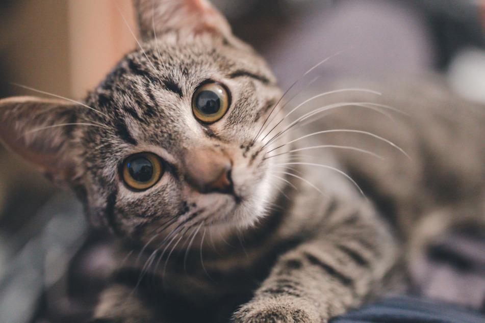 Was tun, wenn die Katze nachts den Schlaf stört?