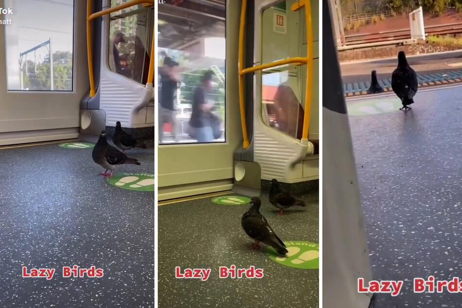 Ganz geduldig warten diese Täubchen, dass die Bahn an ihrer Station anhält.