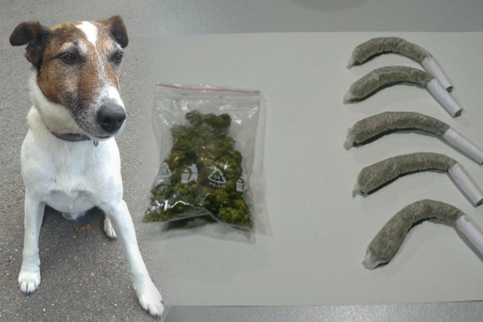 Darauf fiel Hund Lucky nicht rein: Mann will Drogen mit Kaffee-Geruch überdecken