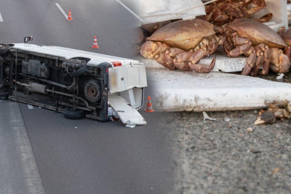 Krabben auf der A4: Feuerwehr rettet Unfallopfer und Tiere