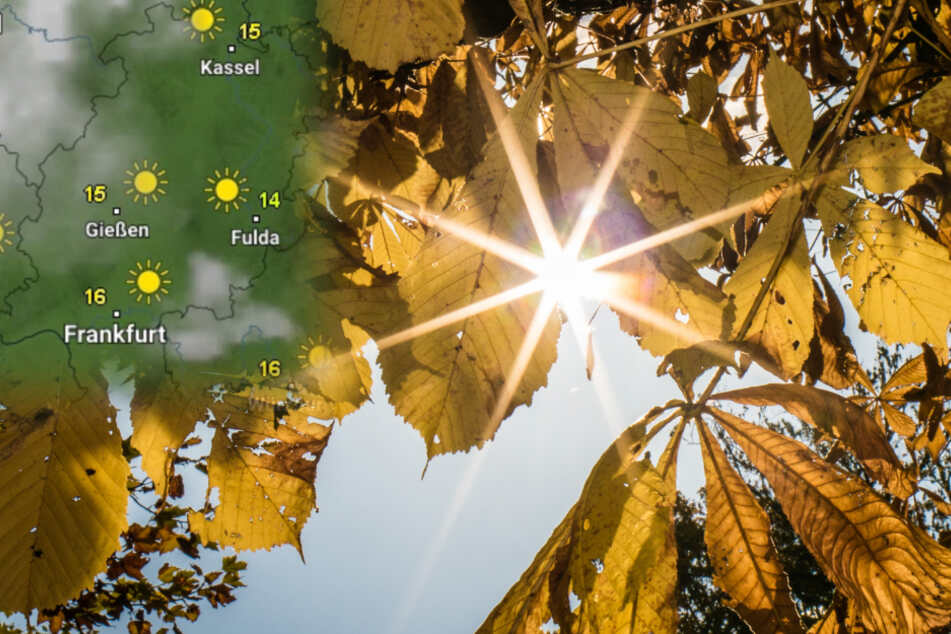 Herbst-Sonne auf dem Frankfurter Lorberg: In der kommenden Woche dürfen die Hessen auf ein paar Sonnenstrahlen hoffen.