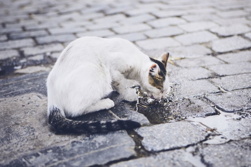 Am Messtag müssen Katzen im Haus gehalten werden. (Symbolbild)