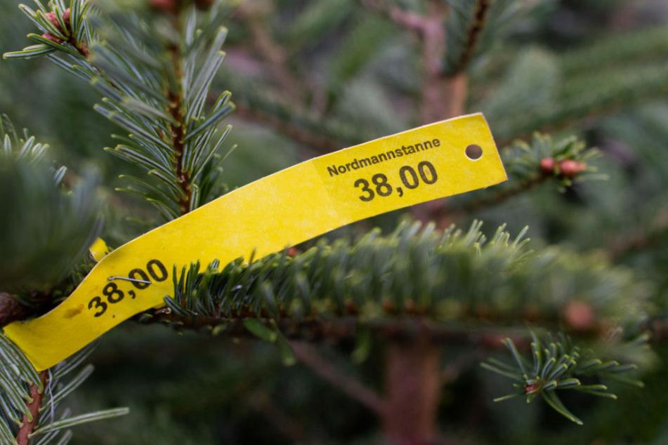 Ein Preisschild in Höhe von 38 Euro hängt an einer Nordmanntanne. Der Diebstahl eines Tannenbaums wurde einem gesuchten Dieb am Samstag in Brandenburg an der Havel zum Verhängnis. (Symbolfoto)