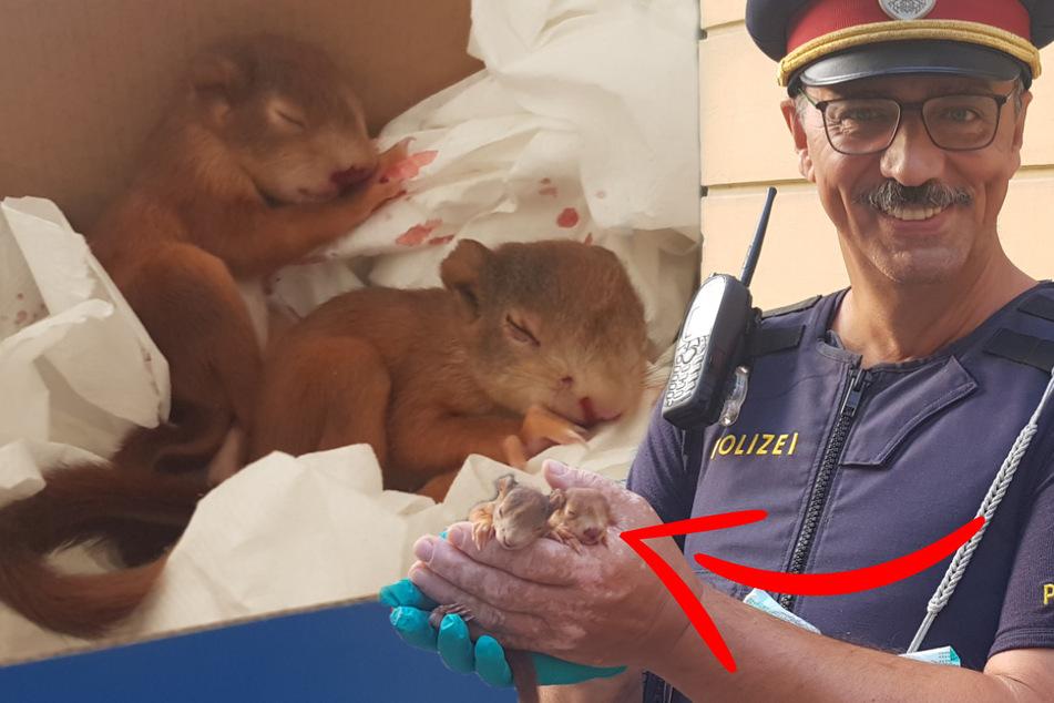 Krähen stürzen sich auf Baby-Eichhörnchen: Polizei greift ein