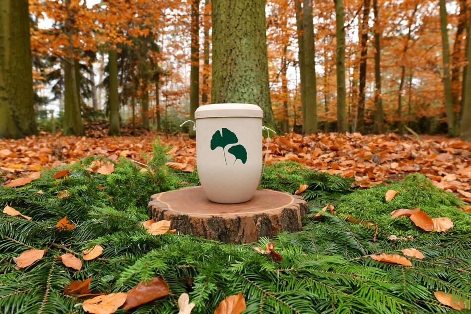 Im Wald findet die Asche Verstorbener in biologisch abbaubaren Urnen eine Ruhestätte unter Roteichen, Eichen, Buchen, Birken und Bergahornen.