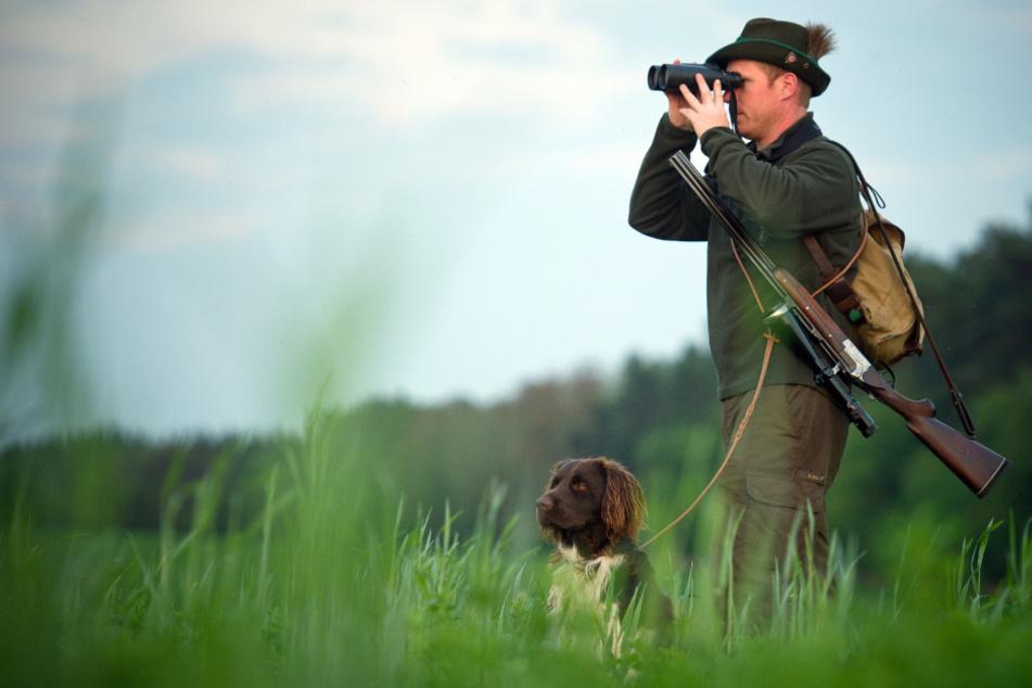 Überwacher: Jäger sind derzeit besonders in der Grenzregion auf der Hut. Dort müssen alle toten Wildschweine auf den ASP-Virus getestet werden.
