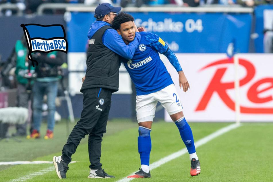 Hertha BSC: Schalkes Weston McKennie im Anflug auf die Hauptstadt?
