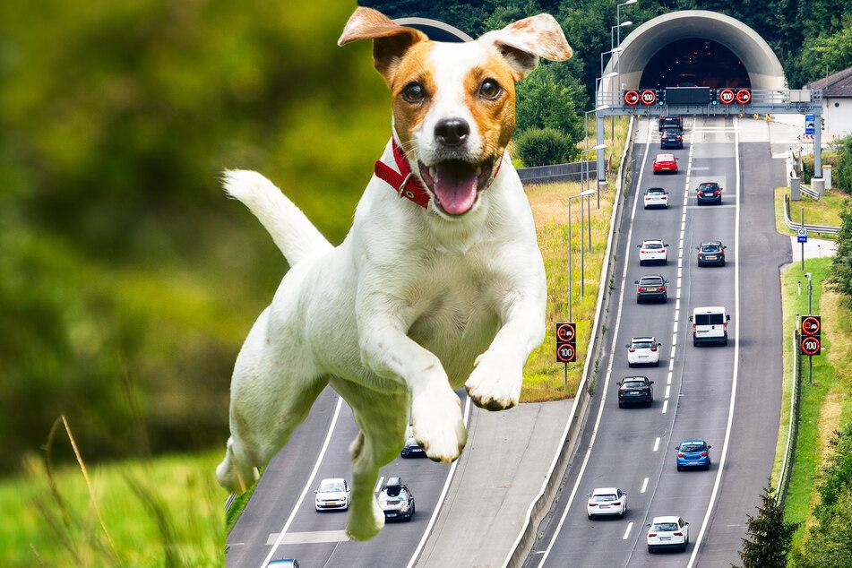 Hund rennt auf Autobahn, wird in die Luft geschleudert und stirbt
