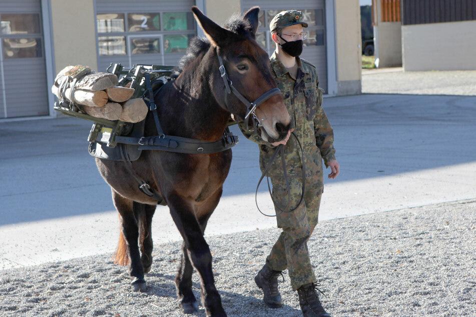 Ein Soldat vom Gebirgsjägerbataillon läuft mit einem Muli über den Kasernenplatz.
