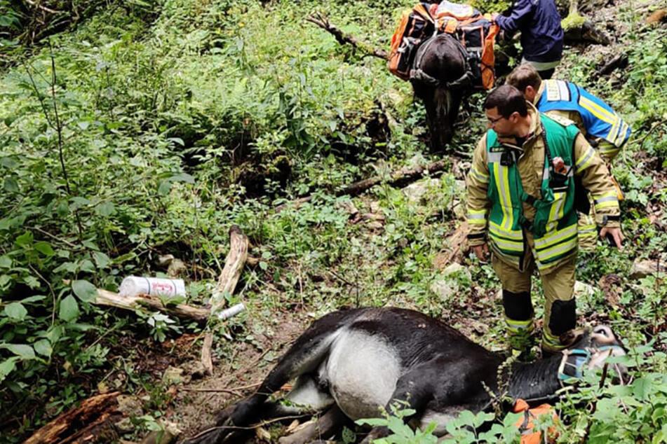 Nach 50-Meter-Sturz: Esel werden per Hubschrauber gerettet