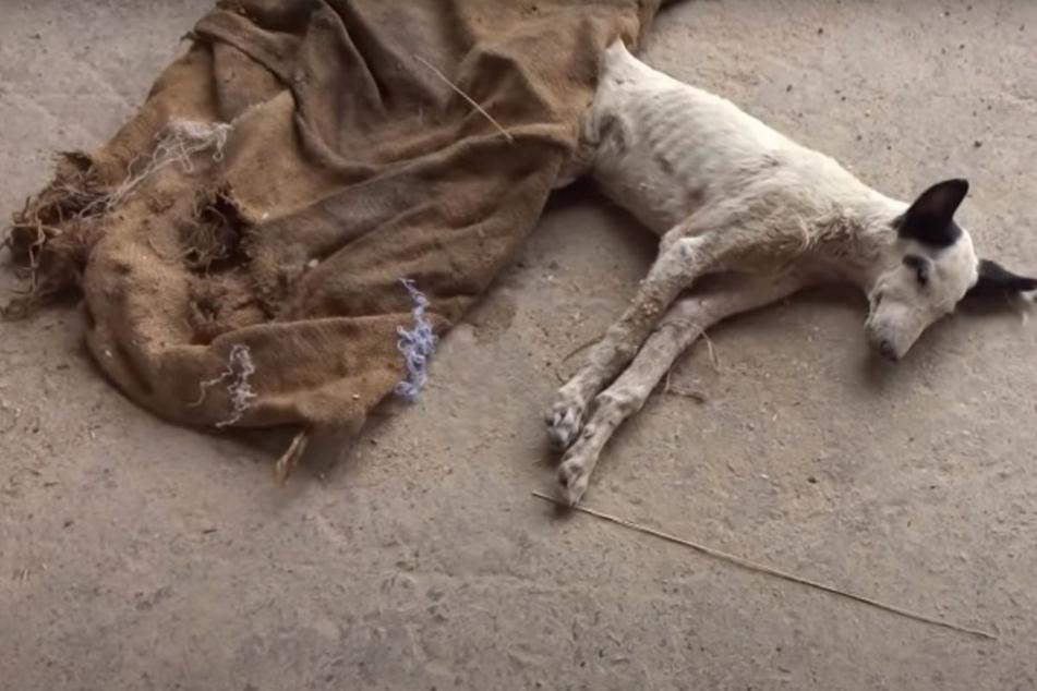 Retter glauben, Hund sei angefahren worden: Doch die Wahrheit ist eine ganz andere