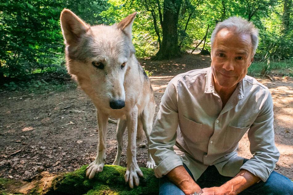 Schauspieler Hannes Jaenicke dreht Doku im Wolfsrevier