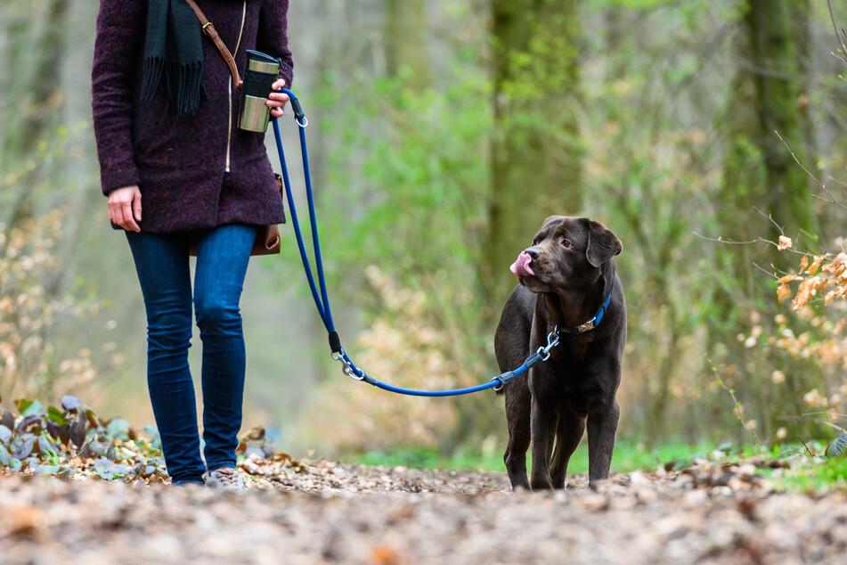 Eine Frau geht mit einem Hund an der Leine spazieren. (Archivbild)