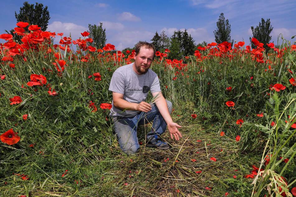 Landwirt Christoph Schlitter (32) steht auf seinem niedergetrampelten Getreidefeld in Radebeul. Influencer und Hobbyfotografen machen ihm das Leben schwer. ^