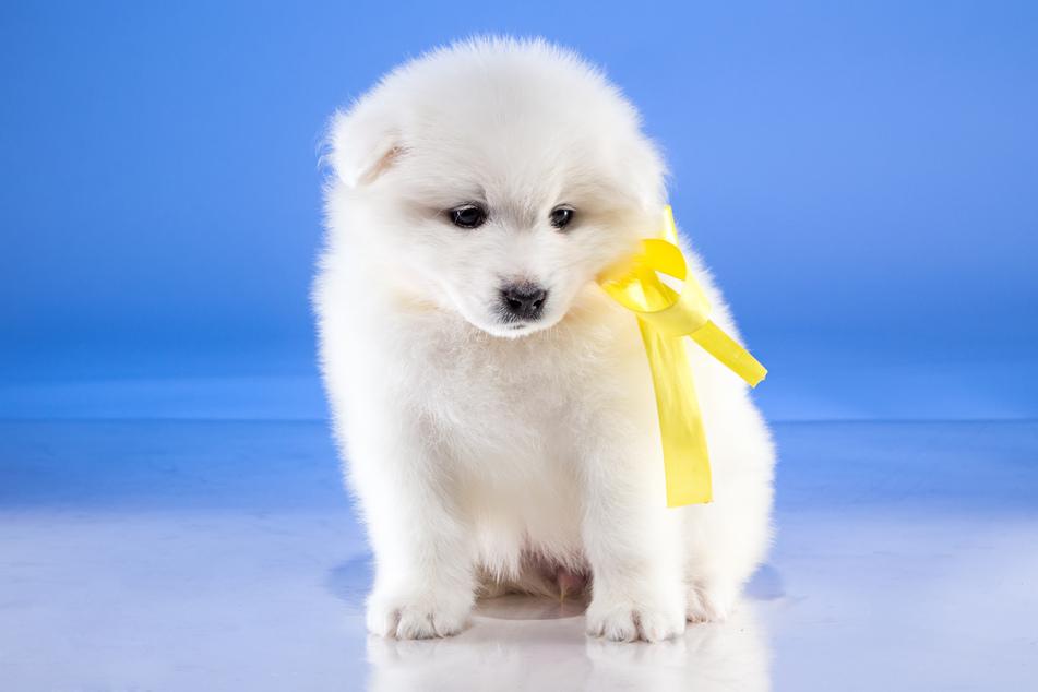 """Schleife bei Vierbeinern: Was bedeutet """"Der Gelbe Hund""""?"""