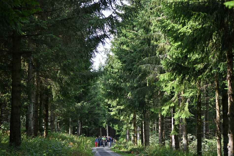 In Teilen Thüringens gilt die höchste Waldbrandgefahrenstufe.