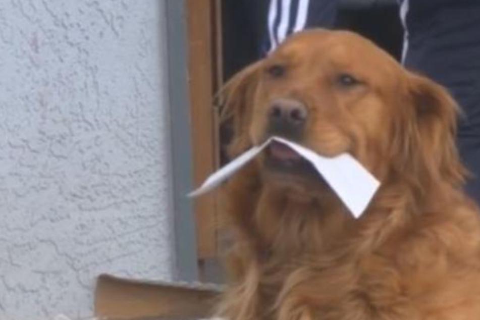 Hund liefert Essen an Nachbarin in Quarantäne