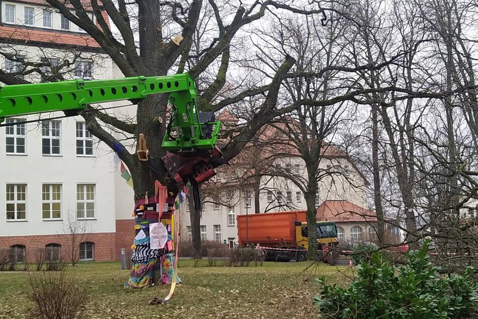 Baumfällung am Küchwald-Klinikum: Mitarbeiter und die Grünen protestieren.