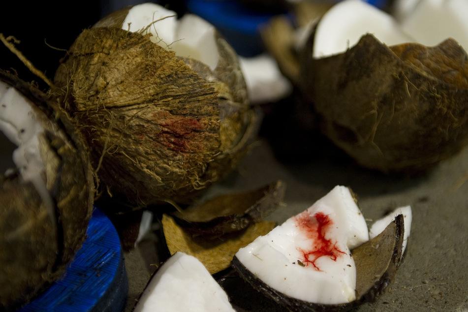 Innerhalb von 60 Sekunden hat der Mann 87 Kokosnüsse mit dem Ellenbogen in zwei Hälften zerteilt. (Symbolbild)