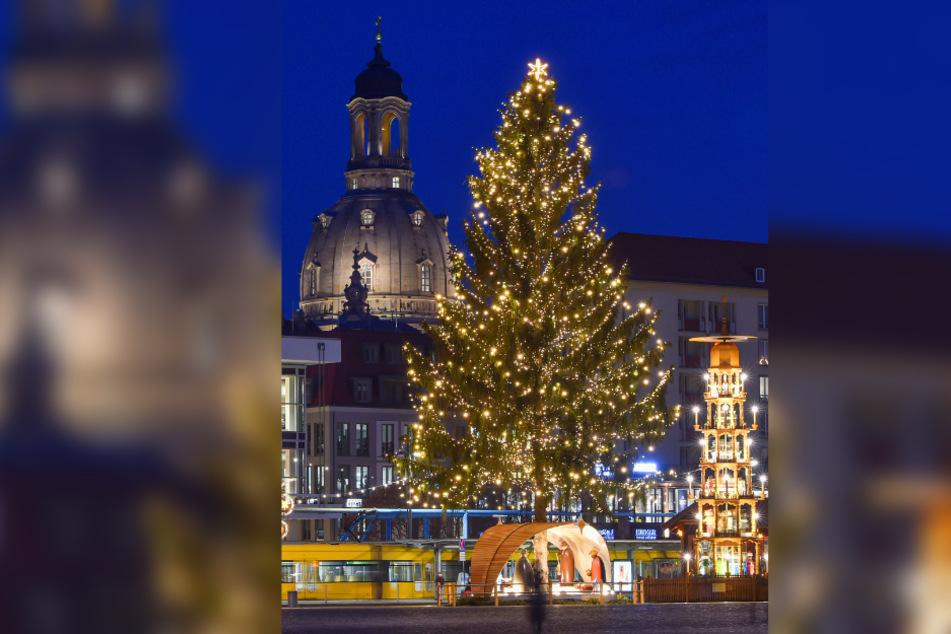 Dresden: Wer hat den Längsten? Beschneidung kostet Dresden den Sieg