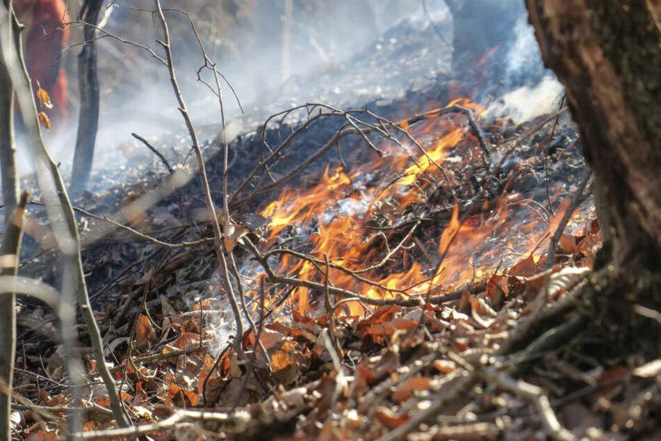 Bei der anhaltenden Trockenheit besteht eine erhöhte Waldbrandgefahr. (Symbolbild)