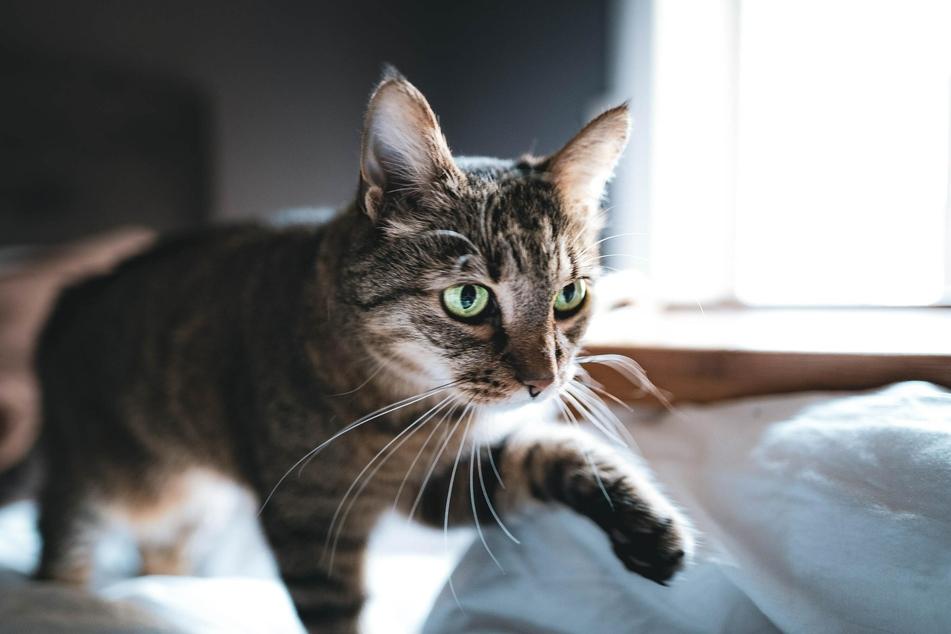 Jede Katze hat ihre eigenen Gründe, warum sie nachts besonders aktiv wird.