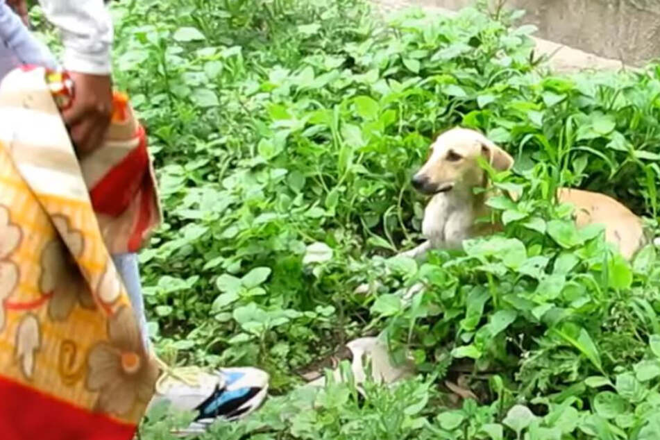 Men find terrified dog in the bushes and make a terrible discovery